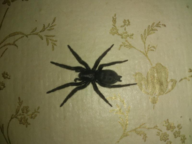 Черный паук в доме