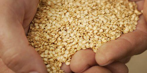 Семена чили