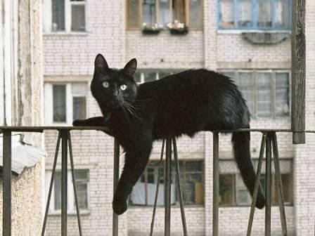 Чёрная кошка на перилах балкона