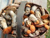 Чистим грибы в лесу и дома