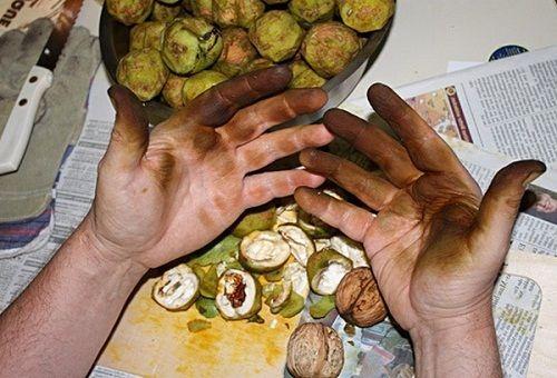 Коричневые руки и зелёные орехи в миске и на столе