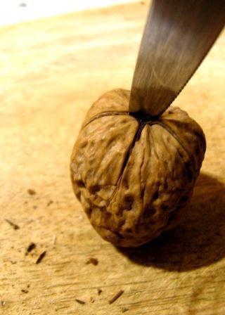 Остриё ножа, протыкающее скорлупу грецкого ореха