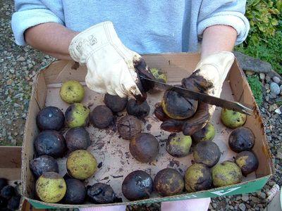 Руки в перчатках чистят орехи