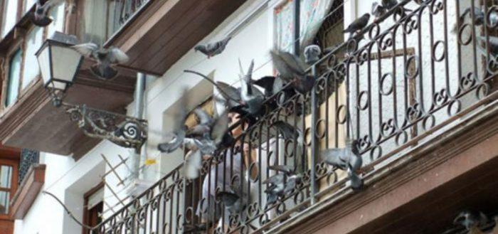 Стая голубей на балконе