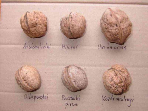 Виды грецких орехов