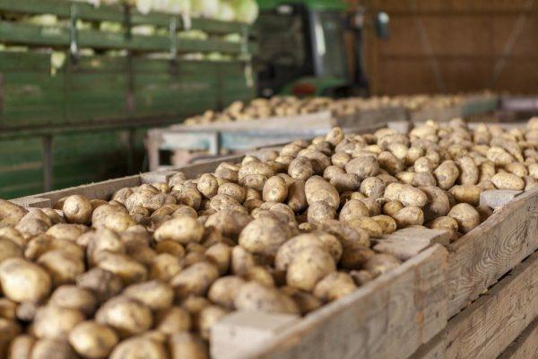 Ящики для хранения картошки
