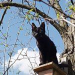 Черный кот сидит на скворечнике