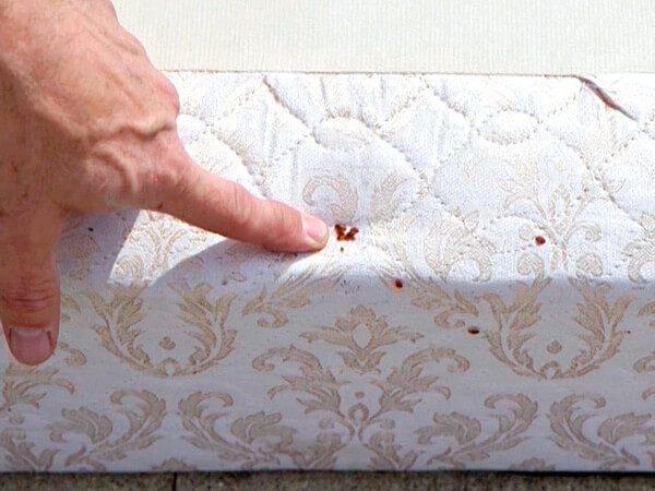 Клопы на мягкой мебели