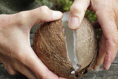 Вскрытие кокоса