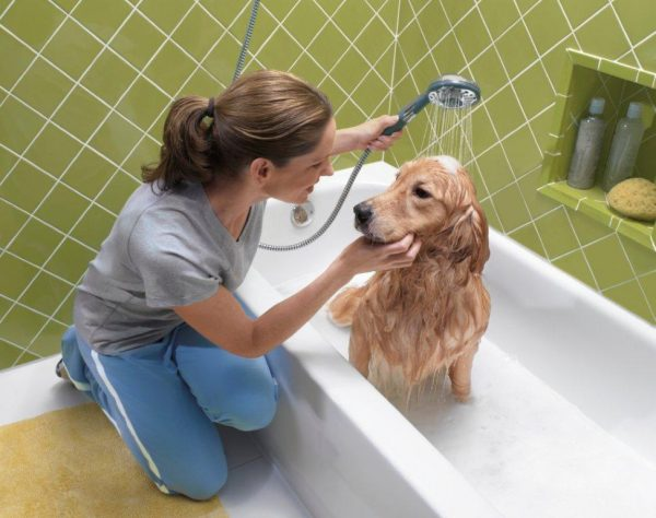 Собаку моют, чтобы избавиться от блох