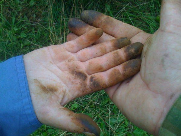 Руки, выпачканные грибами, в том числе маслятами