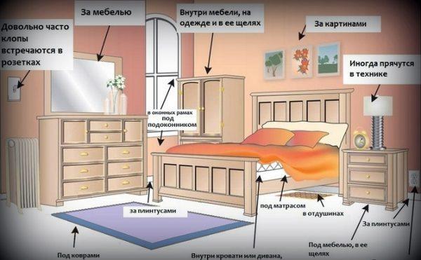 Схема, демонстрирующая места жительства клопов в комнате