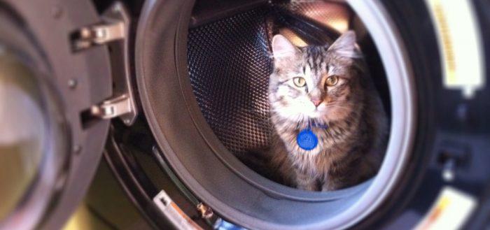 кот на стиральной
