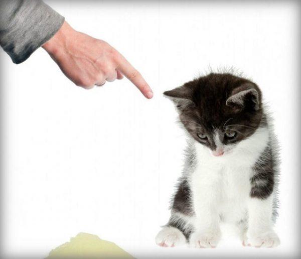 Кошку наказывают