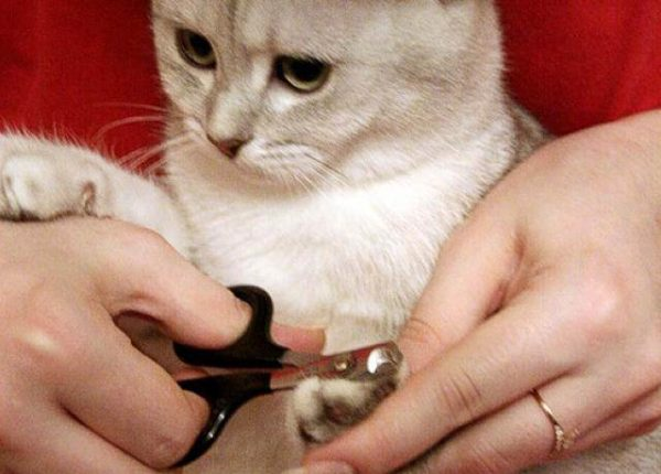 стричь когти коту