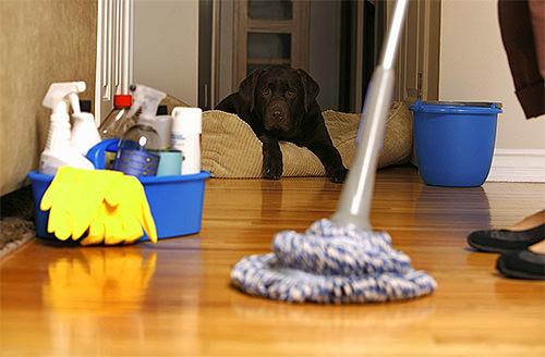 Шваброй моют полы, на заднем фоне собака в кресле