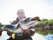 Большая щука в руках рыбака