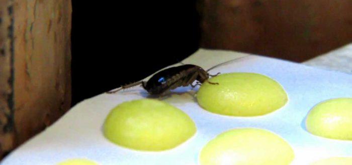 Как сделать шарики от тараканов с борной кислотой и яйцом