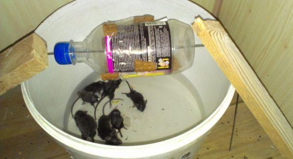 Горизонтальная ловушка из пластиковой бутылки