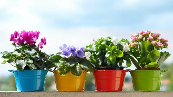 Горшки с растениями