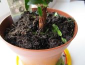 Мошки в земле комнатного растения