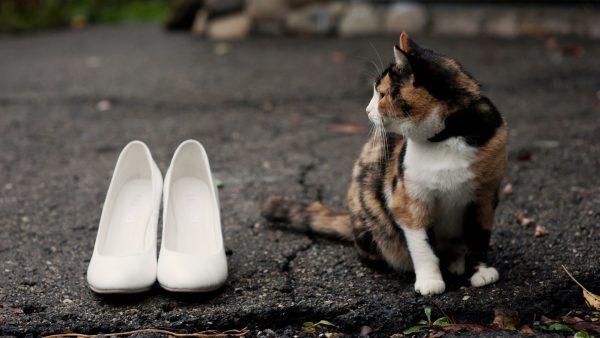 Кошка и белые туфли