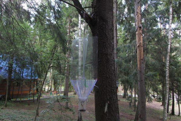 Феромонная ловушка для короеда